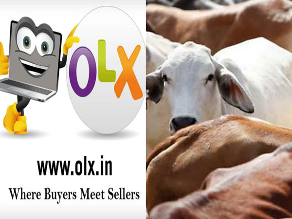 Rajasthan plans OLX like portal for cows - Oneindia News
