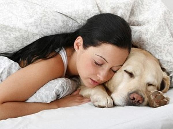 The Effect of Dogs on Human Sleep in the Home Sleep Environment