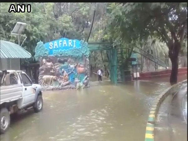 Safari at Nehru zoo suspended temporarily due to waterlogging