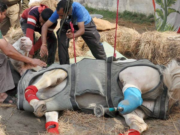 Horse Shaktiman death: U'khand govt wants withdrawal of case against BJP MLA Ganesh Joshi