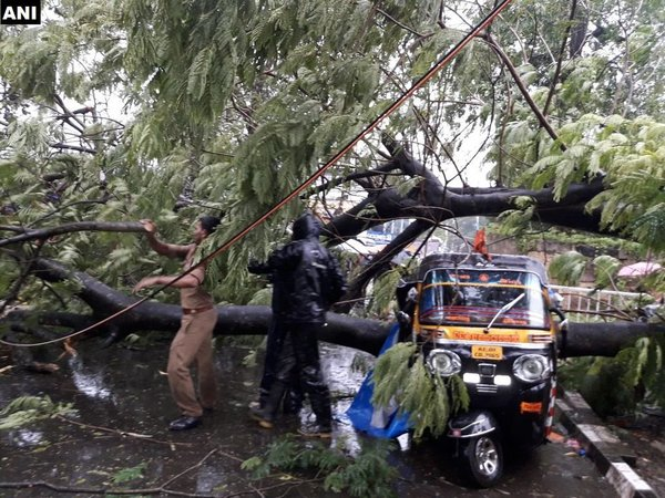 Strong winds uproot trees in Trivandrum