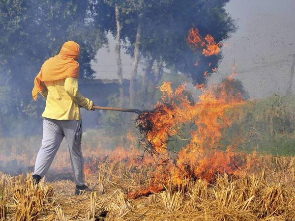 A farmer burns stubbles at his paddy field on the outskirts of Amritsar on Friday. Despite a ban on stubble burning, farmers in the states of Punjab and Haryana are still burning paddy stubble before they grow the next crop. PTI Photo
