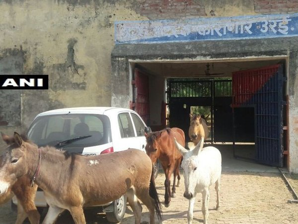 UP police detains donkeys for destroying plants, release after 4 days. Courtesy: ANI news