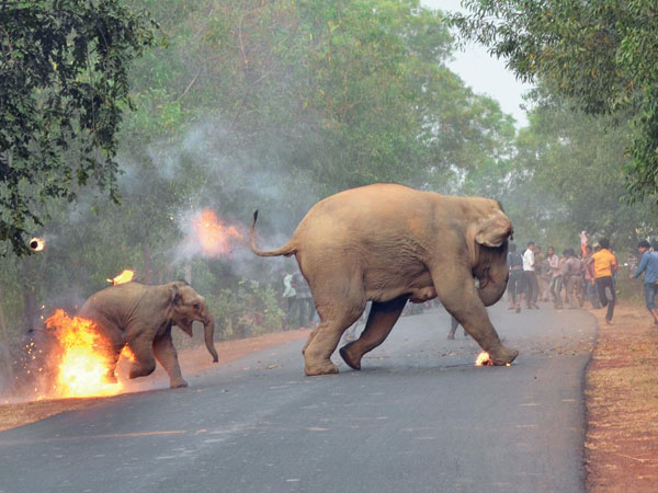 Hell is here: Burning elephant photo wins award