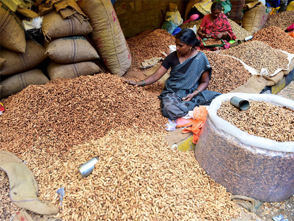 A vendor sorts groundnuts at the two-day annual Groundnut fair