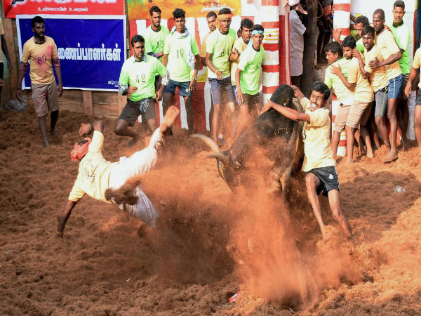 Participants try to tame a bull during Jallikattu event