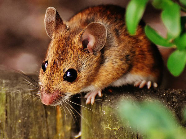 Rats chew up Rs 12 lakh worth currency notes in ATM!