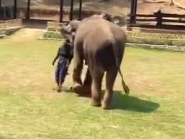 Don't dare mess with my mahout! Elephant rushes to caretaker's help after seeing him being 'attacked
