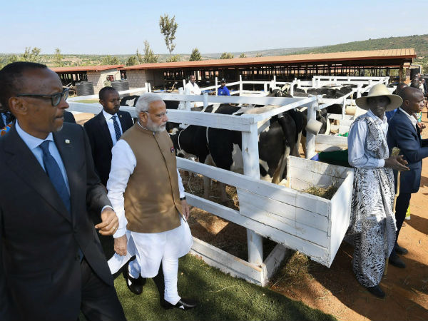 PM gifts 200 cows to village in Rwanda
