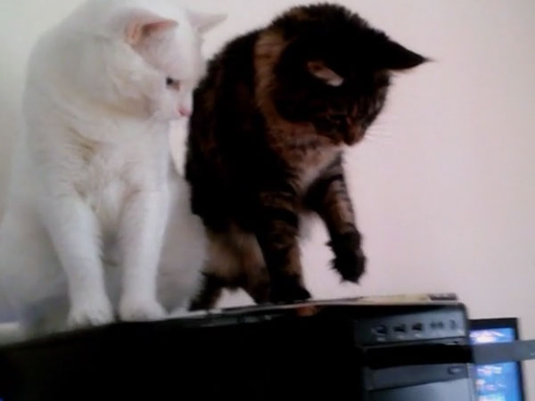 How's that CD drive moving on its own? These two cats are simply clueless!