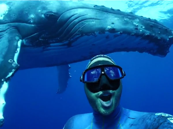This diver takes the selfie of his life under the ocean
