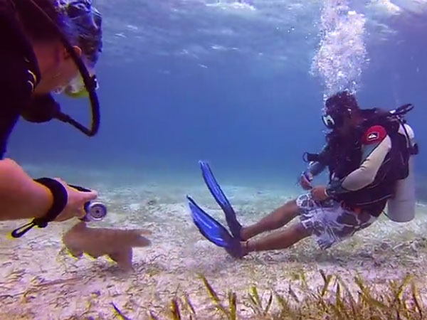 This sea creature is following the scuba divers like a lost puppy… cute
