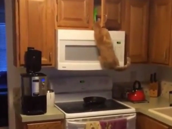 This cat is such a foodie that it reaches out to its treat by hook or crook