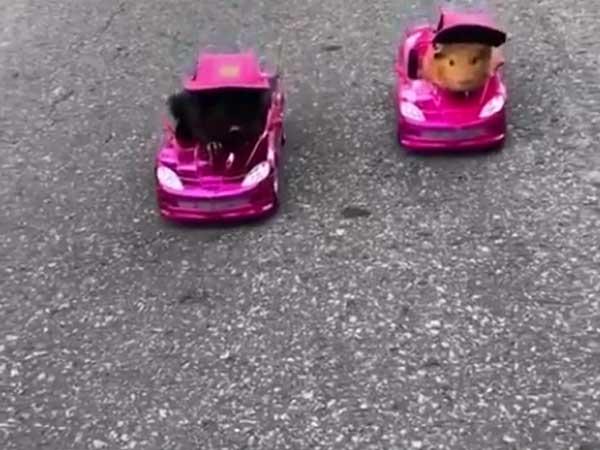 Two cute little car racers take on each other in a close competition on road pavement
