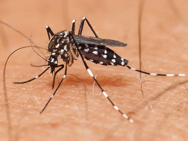 Rajasthan declares alert over Zika virus outbreak
