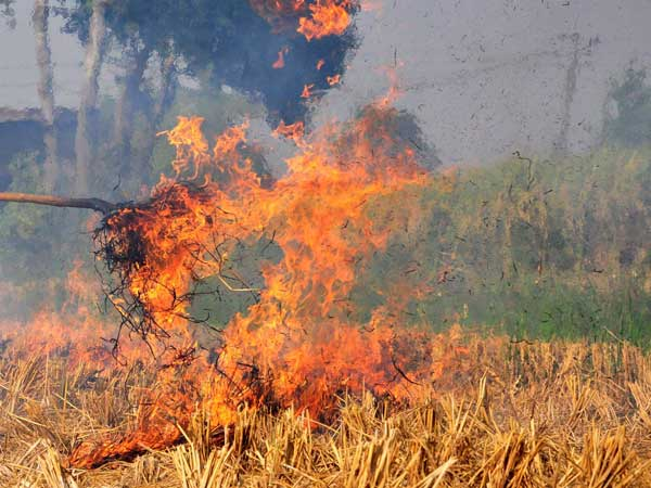 Stubble burning still continues