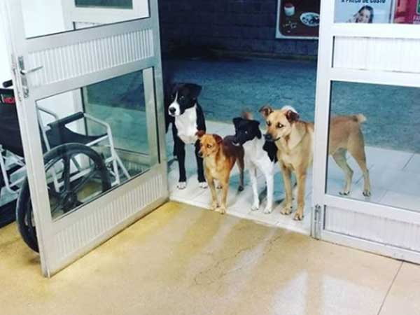Dogs eagerly wait at hospital entrance for homeless man who undergoes treatment inside