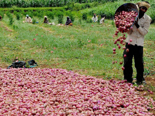 Farmer who sent onion earnings to Modi, writes to PMP on false findings