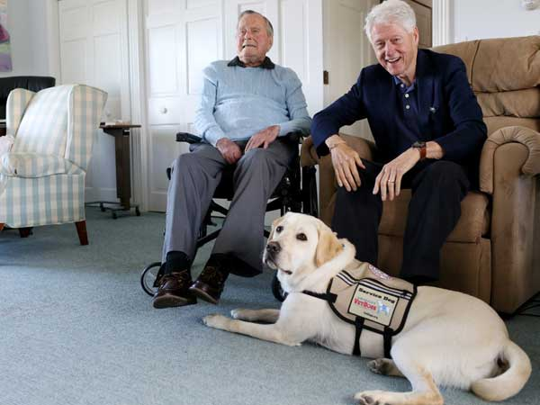 As George H W Bush is laid to rest, his service dog Sully also mourns like million others