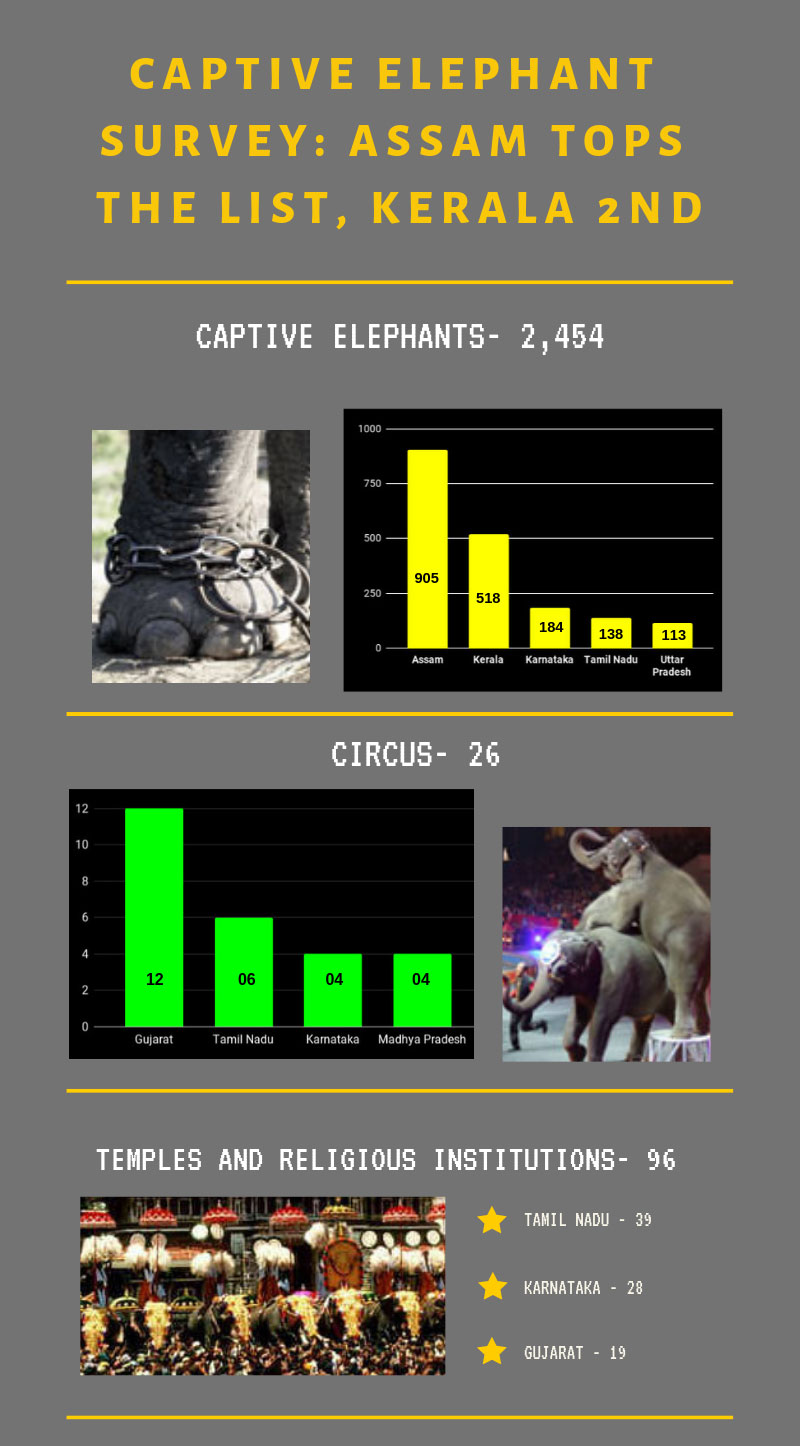 First captive elephant survey out: This is where your state stands