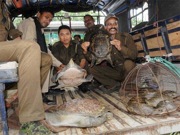 Wildlife trade: India helps foresters fight back against cyber crime