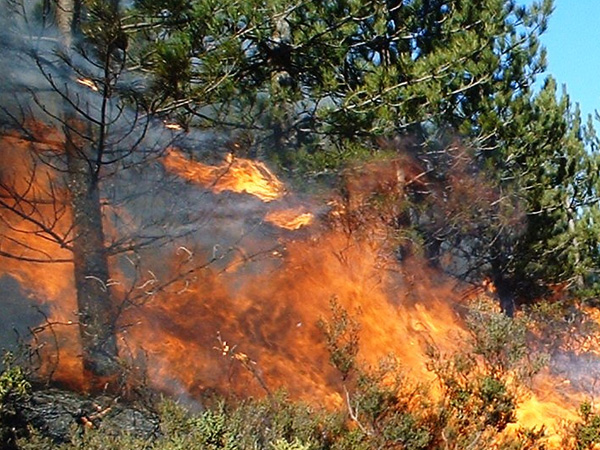 [Karnataka number 1 in forest fires, Maharashtra is second]