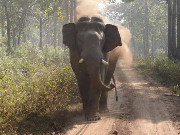 West Bengal: Little girl falls from scooter, wild elephant shields her from own herd