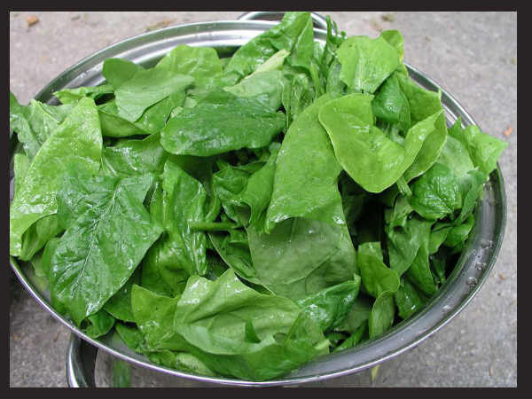 Spinach Day: Now, what is this day all about?