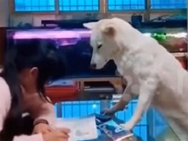 China: Man trains dog to supervise daughter concentrating on homework