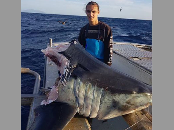 Gruesome! Something unknown bit off this shark's 100-kg head!