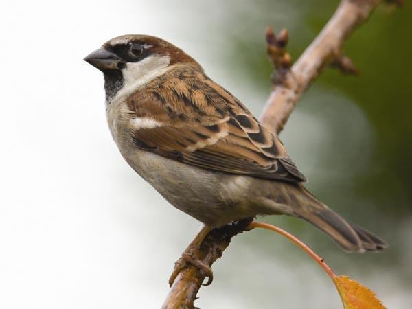World Sparrow Day 2019: Say, ' I LOVE Sparrows'