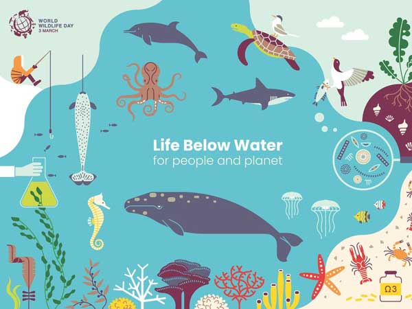 World Wildlife Week: Life below water matters