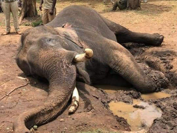 RIP Drona, you gentle, magnificent, intelligent elephant