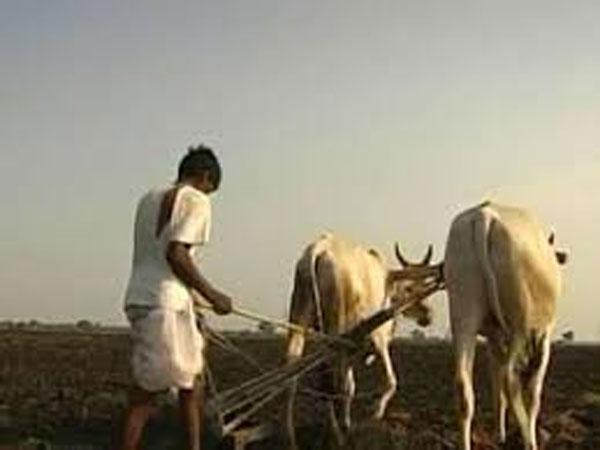 Pepsico India withdraws all cases against Gujarat potato farmers
