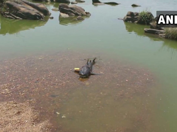 Karnataka: Fishes found dead on banks of Tunga River