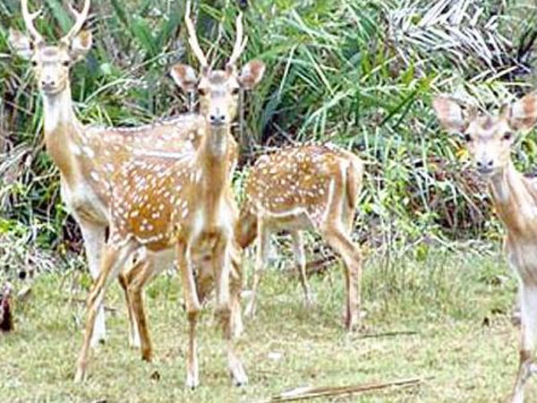 Cyclone Fani: Concern raised over 4,000 deer at Balukhand sanctuary