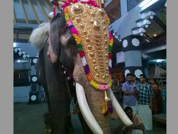 Thrissur Pooram stares at crisis after Govt bans Keralas most-loved elephant