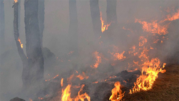 PIL in SC seeks protection of forests, wildlife from fires