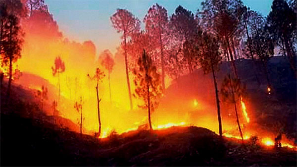 Underground fire in Mohammadi range forests in UP triggers panic