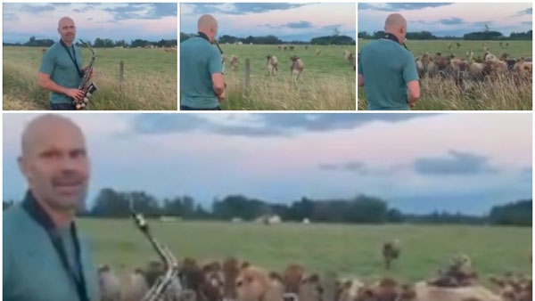 This man plays saxophone to a herd of cows in Oregon field after learning from YouTube