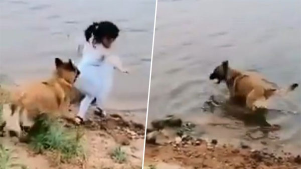 Video of Dog saving girl from falling into water leaves Twitterati in tears