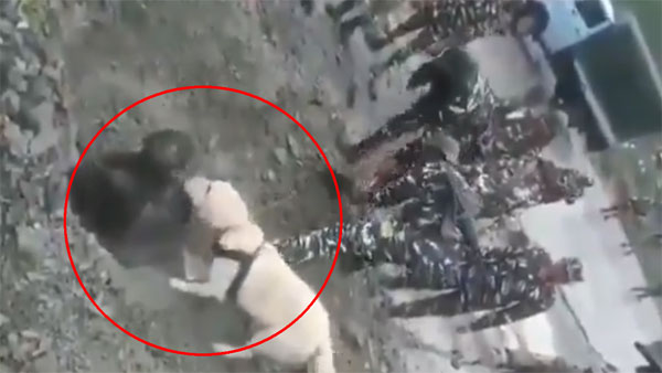 How this alert CRPF dog rescued a man trapped under debris in J&K
