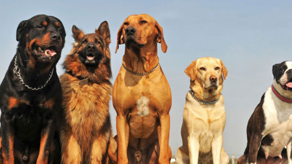 'Cause 4 the Paws' adoption drive to find home for abandoned dogs