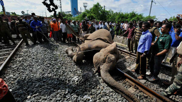 Plan Bee: How the Indian Railways is preventing elephant deaths on tracks