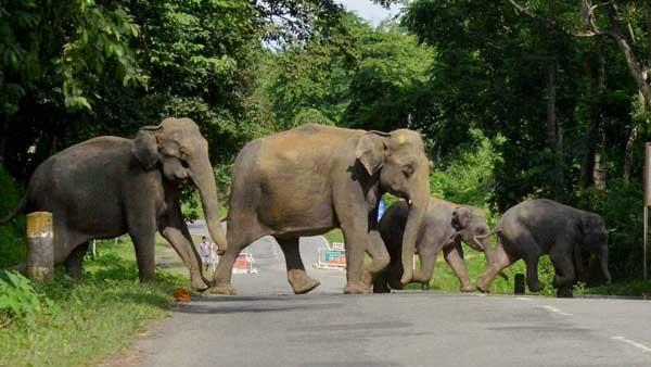 Save an elephant, save the Earth