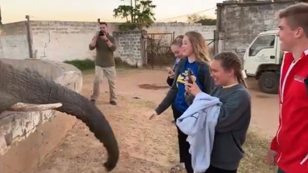 Watch video of African elephant slapping tourist on the face for clicking photos, goes viral