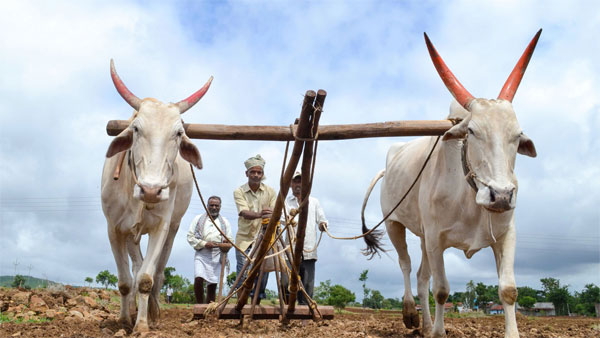 Budget 2019: What is in it for the farmers, how will their income increase