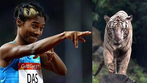 Bangalore zoo names 6 month old tiger cub, 'Hima Das'