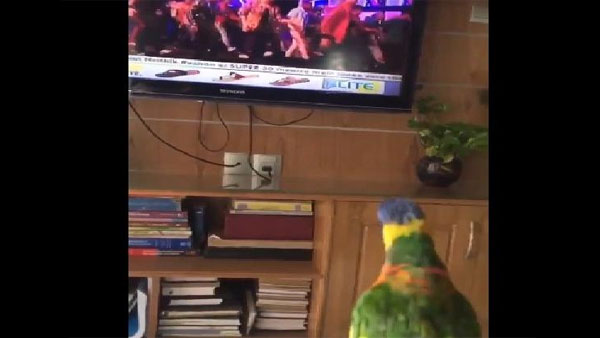 Watch video of Parrot grooving, whistling to popular Bollywood tune, wins Twitter