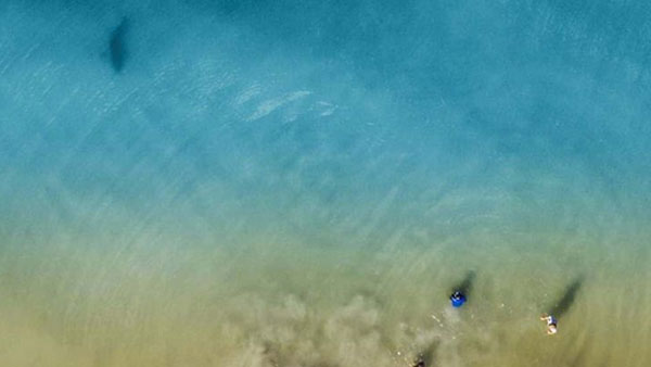 This dad spots shark swimming towards his children while taking photos with drone camera